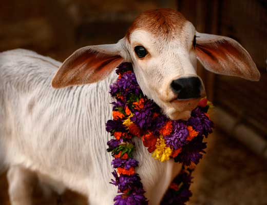 alt Hare Krishna Hare Krishna Hare Krishna Hare Krishna